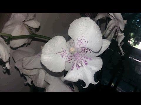 Орхидеи прекрасно живут на улице летом