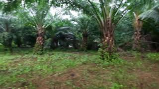 Exceptional 2 Rai Land Plot on Easy Accessible Corner Lot in Had Yao, Krabi