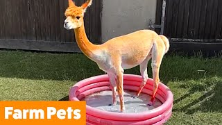 Funniest Farm Animals Bloopers & Reactions | Funny Pet Videos