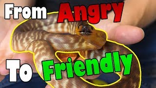 """How to Tame an """"Aggressive"""" Snake"""