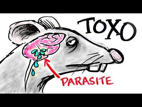 Les préparations des parasites dans le vésicule biliaire