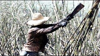 Sofrimento dos Trabalhadores Rurais na década de 80