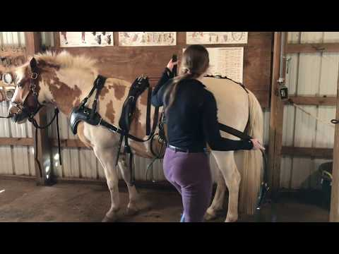 , title : 'How To Harness A Single Driving Horse