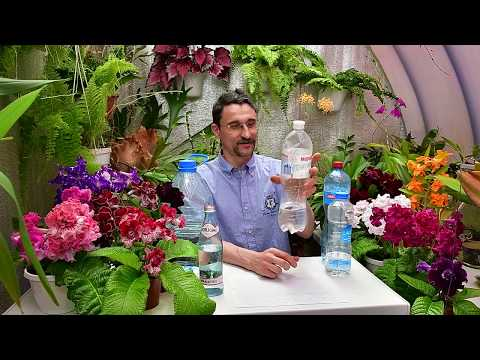 О поливе растений  минеральной водой