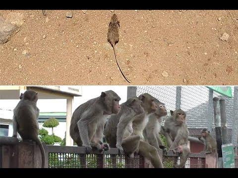 उंदीर सावलीच्या शोधात सैरावैरा, अखेर सावली शोधलीच!