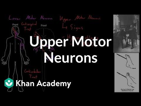 Video Upper motor neurons | Organ Systems | MCAT | Khan Academy