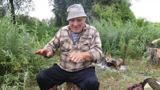 """Охотничии истории. Рассказ деда Алексея о быке по кличке """"Сынок""""."""