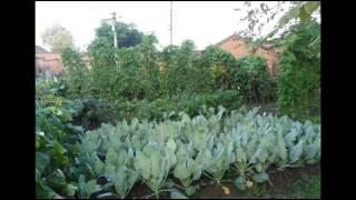 Organic Gardening Tips - The Green Living Expert; Vegetable Gardening for Beginners