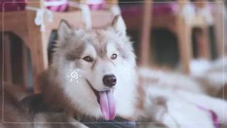 SistaCafe Channel : พาเที่ยวคาเฟ่น้องหมา Inu Machi