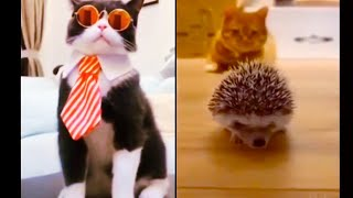 Cute Funny Baby Animals Compilation #23 Dog and Cat funny moment September 2020