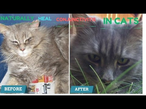 How to Naturally Heal Conjuctivitis in Cats