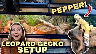 Setting Up A NEW Leopard Gecko Enclosure! | Upgrade For Pepper!
