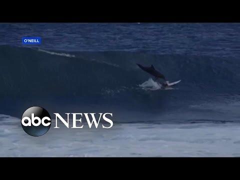 Crash mit Delphin