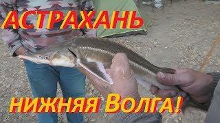 Енотаевка астраханская область рыбалка базы отдыха