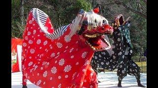 新春獅子舞 吉備の中山を守る会 神道山黒住教本部 20190102 Shishimai 舞狮  사자춤 शेर नृत्य JAPAN