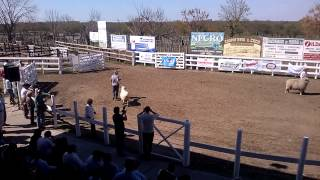 preview picture of video 'Exposición Rural de Federal 2014'