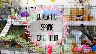 Guinea Pig Spring Cage Tour! | The Small Animal Kingdom
