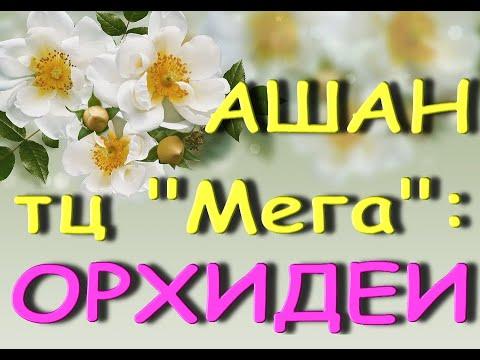 "Ашан:ОРХИДЕИ...""ни себе,ни людям""...01.04.21,ТЦ ""Мега"",Самара."
