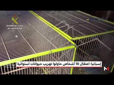 العرب اليوم - شاهد: اعتقال 10 أشخاص حاولوا تهريب حيوانات استوائية من إسبانيا
