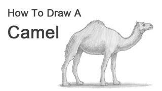 Смотреть онлайн Как поэтапно рисовать карандашом верблюда