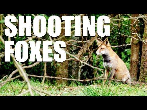 Fieldsports Britain : Shooting foxes