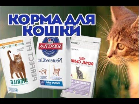Какие корма советует ветеринар для кошки. ВетОтвет.