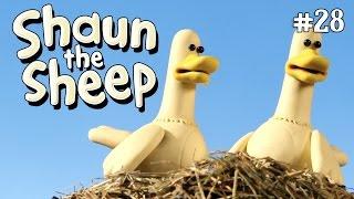 Download Video Shaun the Sheep - Bebek Zebra [Zebra Ducks of the Serengeti] MP3 3GP MP4