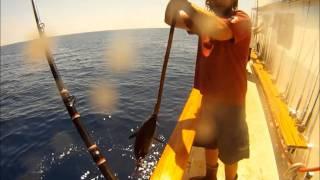 Fisherman's Landing Condor Sportfishing for Wide Open Yellowfin & Bluefin Tuna 1.5 Day GoPro Fishing