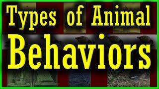 Types of Animal Behavior | Innate or Instinct Vs Learned Behavior | All Types