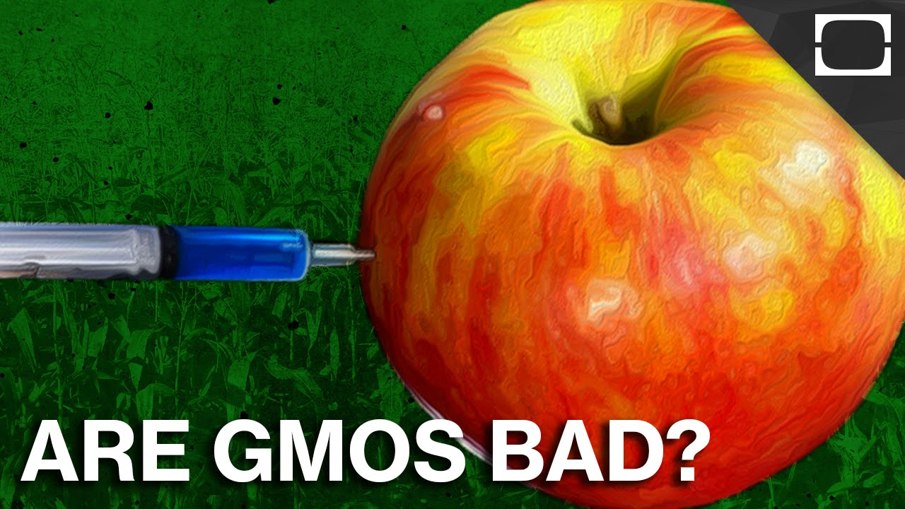 Are GMOs As Scary As They Seem? thumbnail