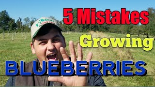 5 Biggest Mistakes When Growing Blueberries!
