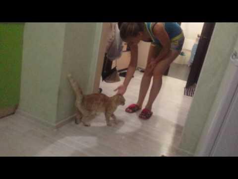 Мстительный кот
