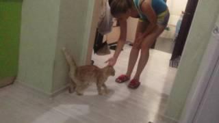Девушка обидела кота ,и попала в нелепую ситуацию.