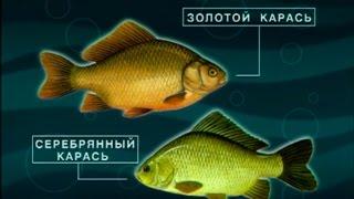 Диалоги о рыбалке карась кубань