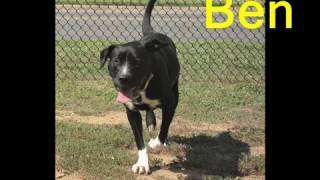 Ben ~ Humane Society of Fort Mill