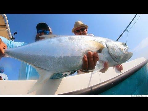 العرب اليوم - شاهد: مغامرة شيقة في البحر لاصطياد سمكة فريدة في دبي