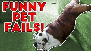 Hilarious Pet Fails 2017 | Funny Pet Videos