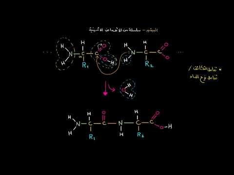 الصف العاشر الأحياء الجُزيئات الضخمة الرابطة الببتيدية