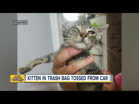 Kitten rescued from trash bag after tossed from car onto Wauchula road