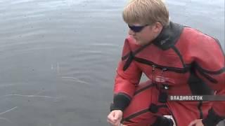 У берегов Приморья стали чаще замечать акул