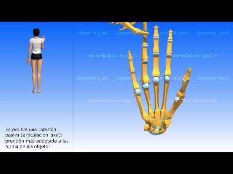 Orientación sobre la rehabilitación después de la artroplastia total de cadera
