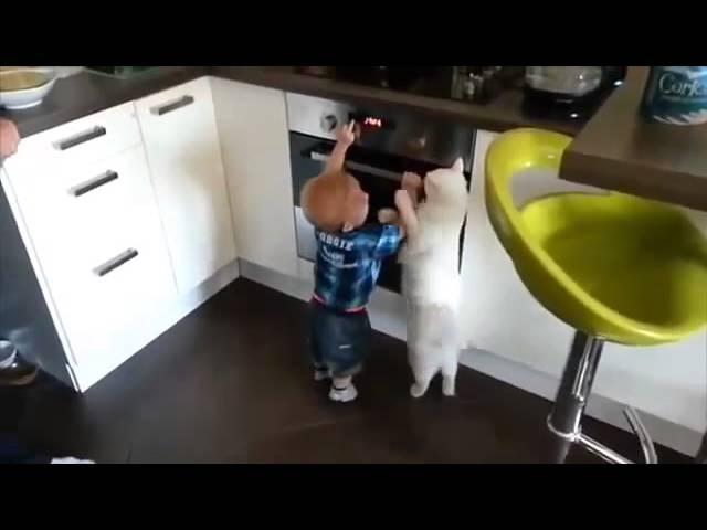 قط يمنع طفلاً من الاقتراب لموقد الغاز