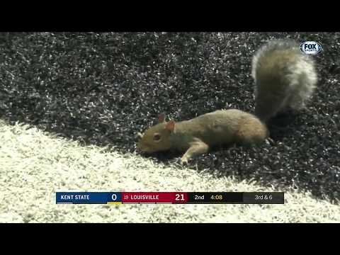 Squirrel wins football game