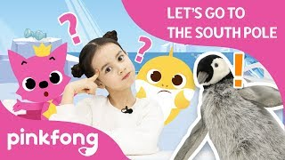 Let's Go to the South Pole | Baby Shark Play | Pinkfong Playfong | Pinkfong Crafts for Children