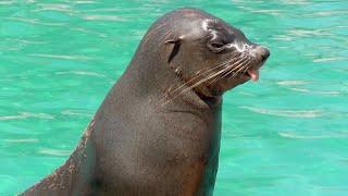 ¿Cómo viven los osos marinos? | Vlog de Guiainfantil
