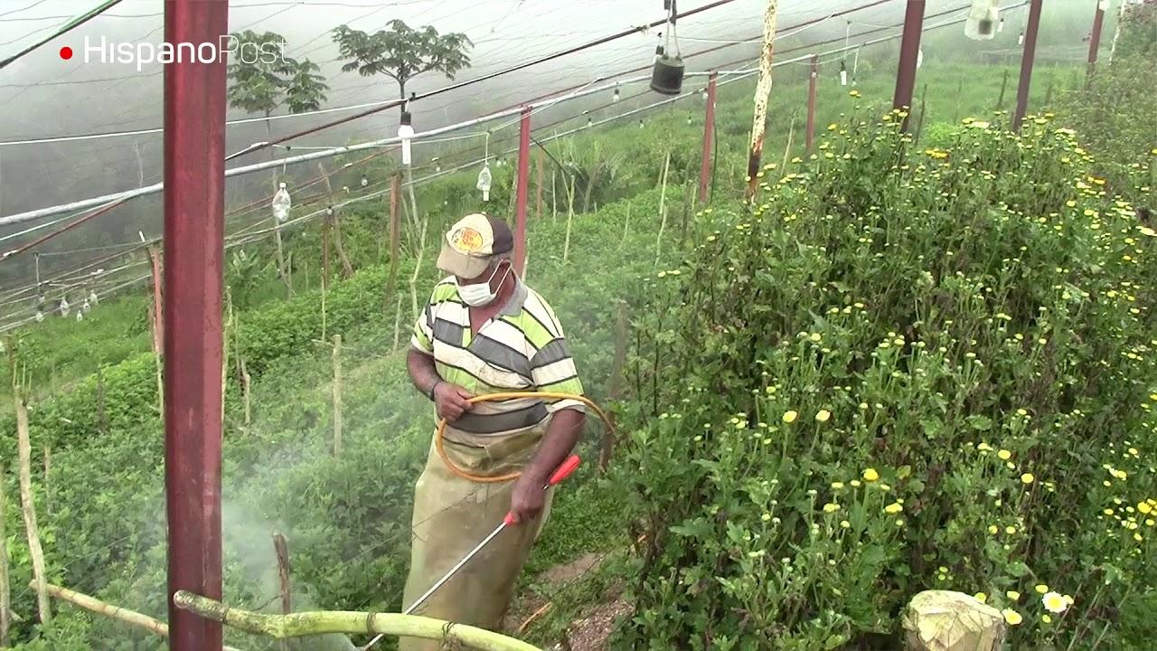 Sin semillas ni fertilizante: El drama de los agricultores venezolanos