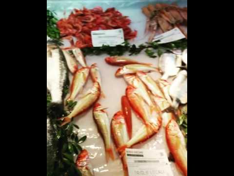 Il forum di pescare 1 4