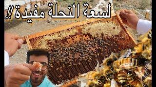 تحدي مواجهة النحل و أكل العسل من الخلية !! وادي قرن- الطائف   Saudi Honey experience