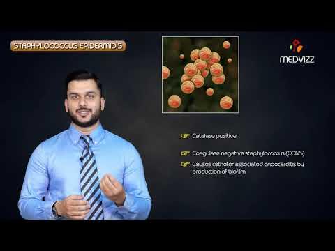I sintomi della prostatite e foto