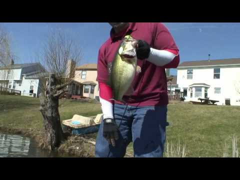Freaking  Huge Monster Bass  Pond Fishing!